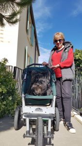 Dog friendly Le Petit Hotel's beloved Kara